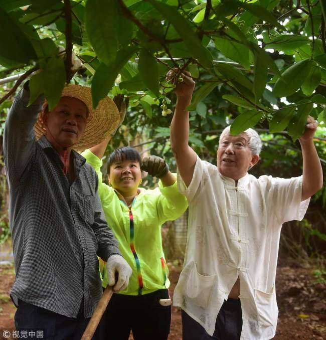 Agricultural expert Deng Deming (R) shows farmers how to care for an apple tree in Qionghai, Hainan Province, on March 12, 2018. [File photo: VCG]