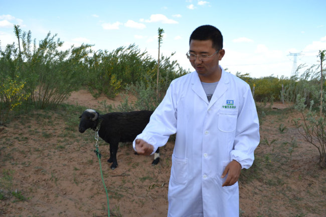 Feng Huan, director of the ecological pasture in Yanchi County, northwest China's Ningxia Hui Autonomous Region. [Photo: China Plus/ Lv Mou]