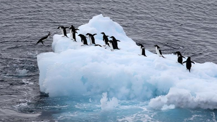 Cute alert! Penguin photos from Chinese researchers in Antarctica