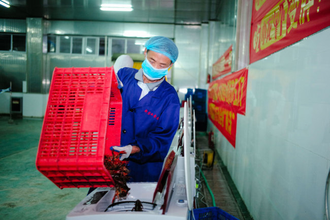 Workers quickly clean crayfish using tailor-made washing machines created by Zhang Kaiwei, an employee at a food processing factory in the city of Honghu in central China's Hubei Province. [Photo: IC]<br/>