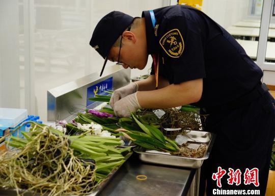 An officer from China's Customs Department, seen here on May 29, 2019, inspects plants destined to go on display at the Beijing International Horticultural Exhibition. [Photo: Chinanews.com]<br/><br/>