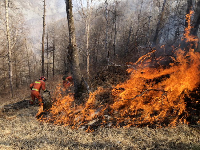 Firefighters struggle to contain a forest fire in north China's Inner Mongolia Autonomous Region. [File photo: IC]