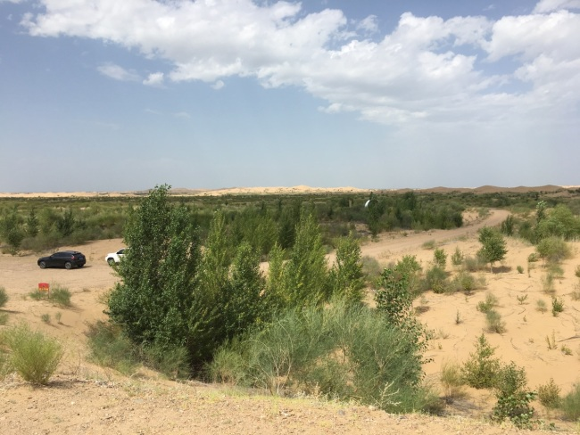 Trees and brushes were planted in the desert in the past 30 years.[Photo: from China Plus]