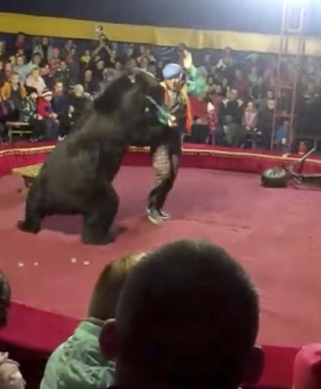 In this video grab provided by Galina Guryeva, a bear attacks the trainer at a circus ring in Olonets, a town 180 kilometers (110 miles) northeast of St. Petersburg, Russia, Wednesday, Oct. 23, 2019. [Photo: Galina Guryeva via AP]